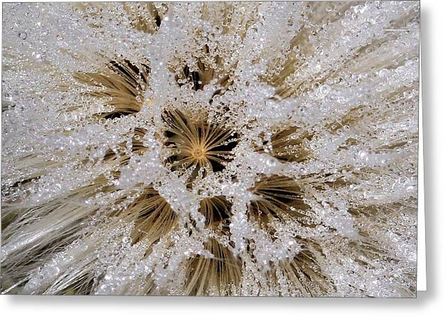 Explosion Of Jewels Greeting Card by Doris Potter