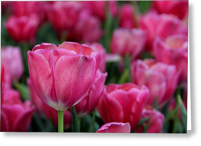 Greeting Card featuring the photograph Explosion Of Pink by Tammy Espino