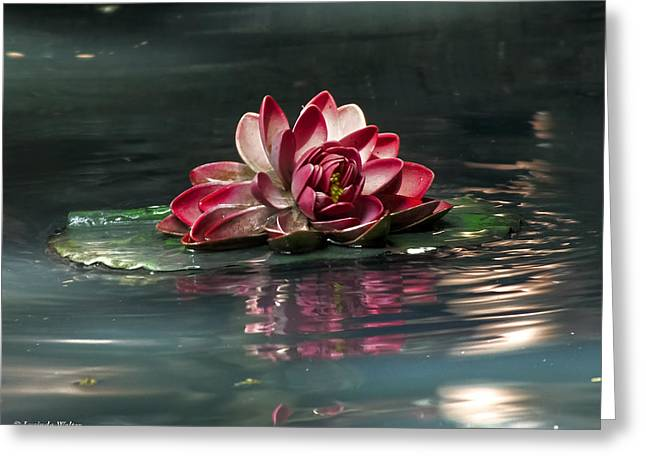 Greeting Card featuring the photograph Exquisite Water Flower  by Lucinda Walter