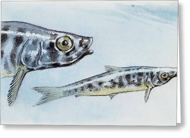 Extinct Fish Greeting Card by Deagostini/uig