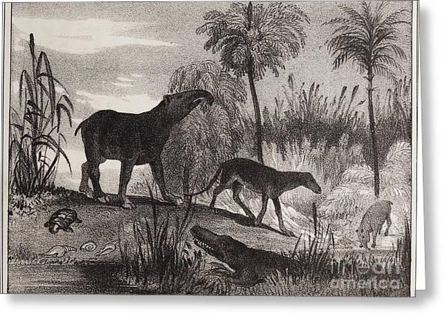 Extinct Prehistoric Animals, 1837 Greeting Card by Paul D. Stewart