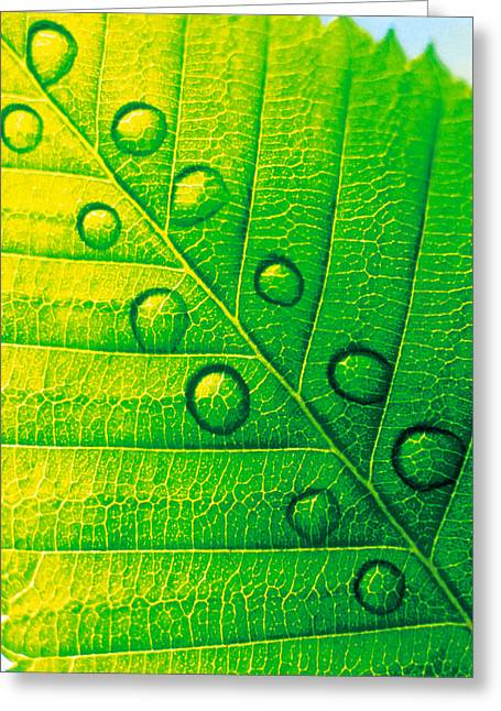 Extreme Close Up Of Leaf Vein Greeting Card