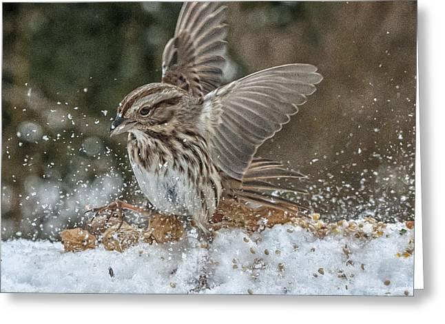 Exuberance Greeting Card by Jim Moore