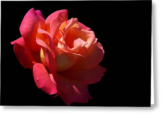 Greeting Card featuring the photograph Eye Catcher by Doug Norkum
