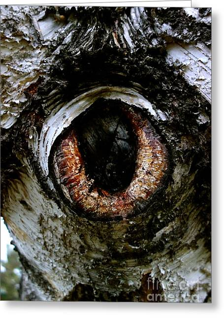 Eye In The Tree 1 Greeting Card by Jacqueline Athmann