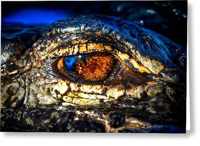 Eye Of The Apex Greeting Card by Mark Andrew Thomas