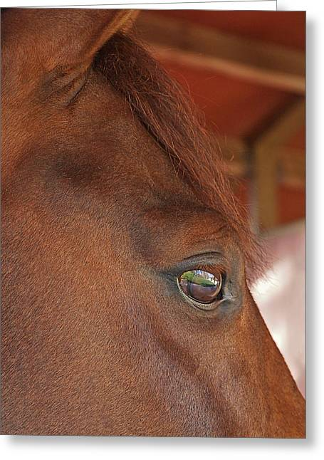 Eye Of The Dreamer - Purebred Pony Greeting Card