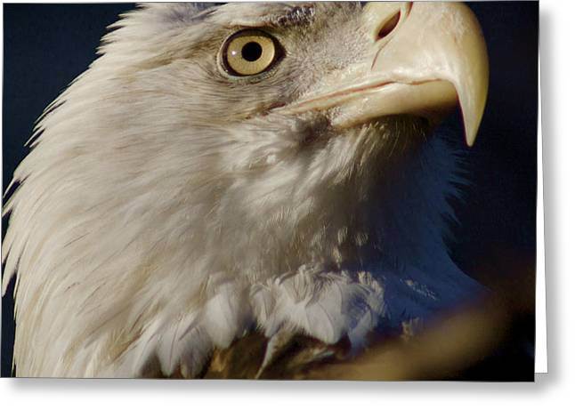 Eye Of The Eagle Greeting Card