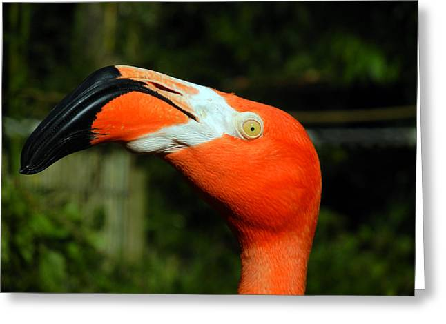 Greeting Card featuring the photograph Eye Of The Flamingo by Bill Swartwout