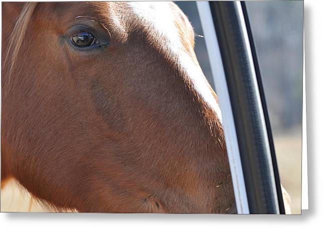 Eye Of The Horse -  Equine 6258 Greeting Card by Paul Lyndon Phillips
