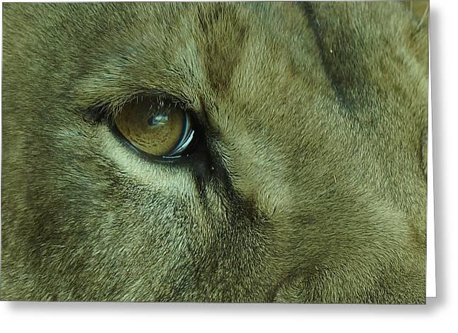 Eye Of The Lion Greeting Card by Ernie Echols