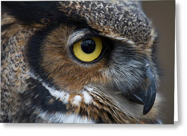 Eye Of The Owl Greeting Card by Craig Brown