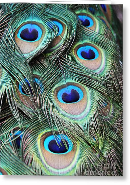 Greeting Card featuring the photograph Eye Of The Peacock #2 by Judy Whitton