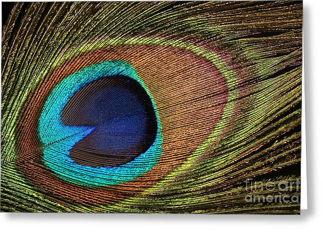 Eye Of The Peacock Greeting Card by Judy Whitton