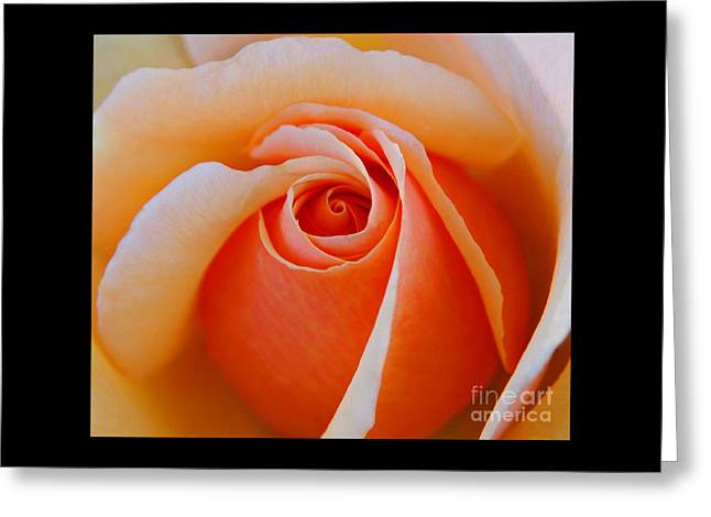 Eye Of The Rose Greeting Card