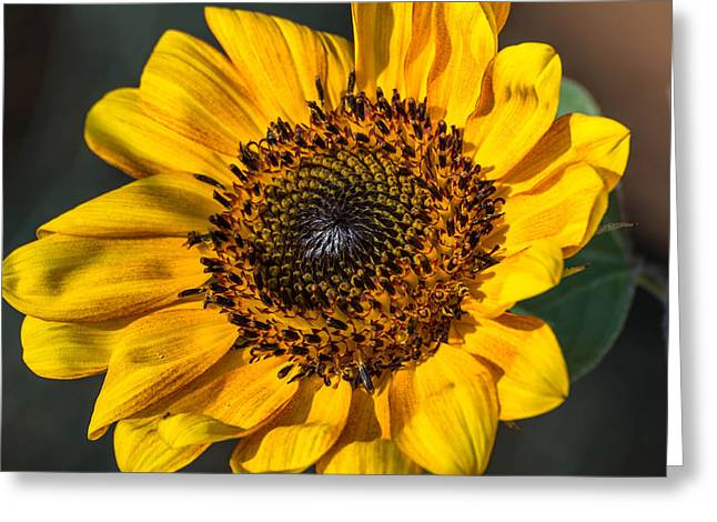 Eye Of The Sun Greeting Card by Michael Moriarty