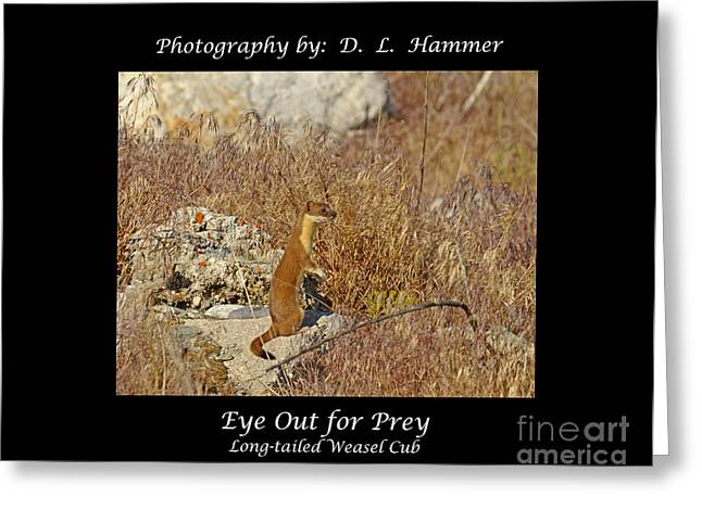 Eye Out For Prey Greeting Card by Dennis Hammer