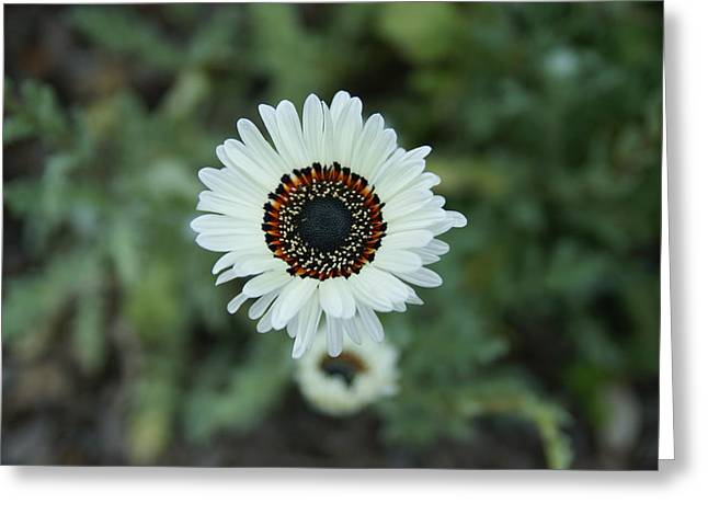Eye See You Greeting Card by Leigh Ann Hartsfield