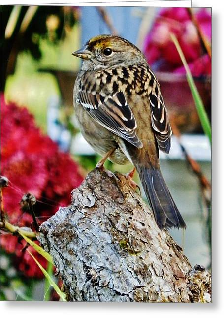 Greeting Card featuring the photograph Eyeing The Sparrow by VLee Watson