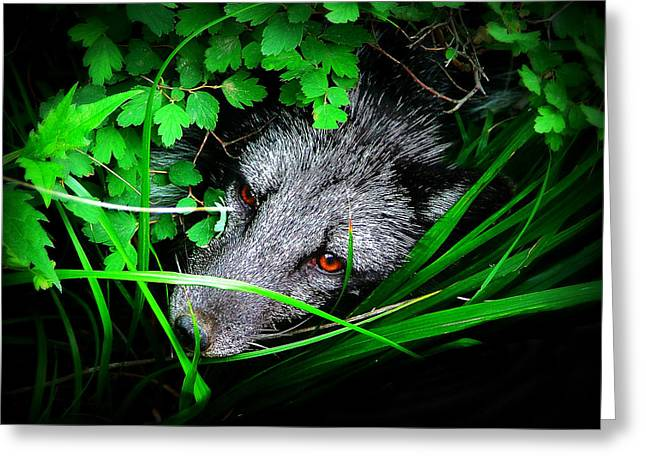 Eyes In The Bushes Greeting Card by Zinvolle Art