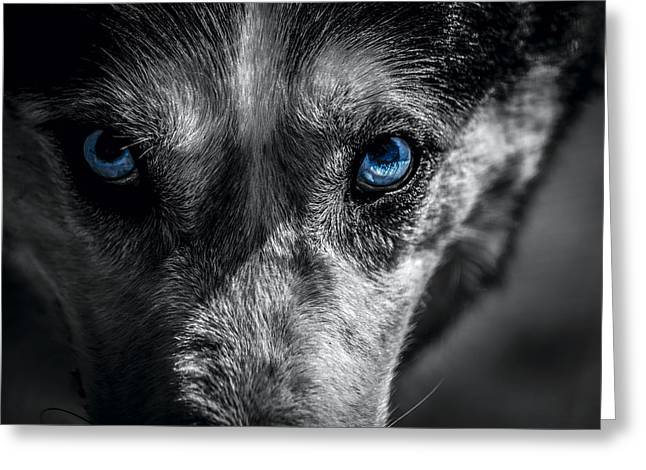 Eyes In The Darkness Greeting Card by David Morefield