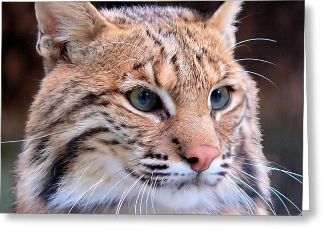 Eyes Of A Lynx Greeting Card
