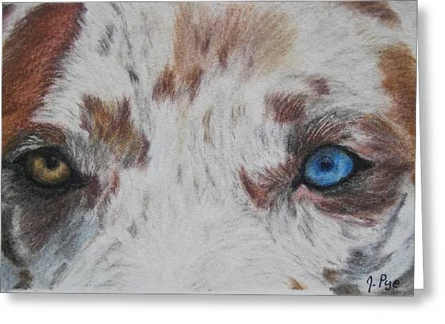 Eyes Of Catahoula Greeting Card