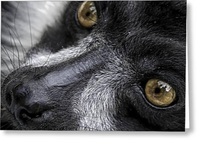 Eyes Of The Lemur Greeting Card by Chris Boulton