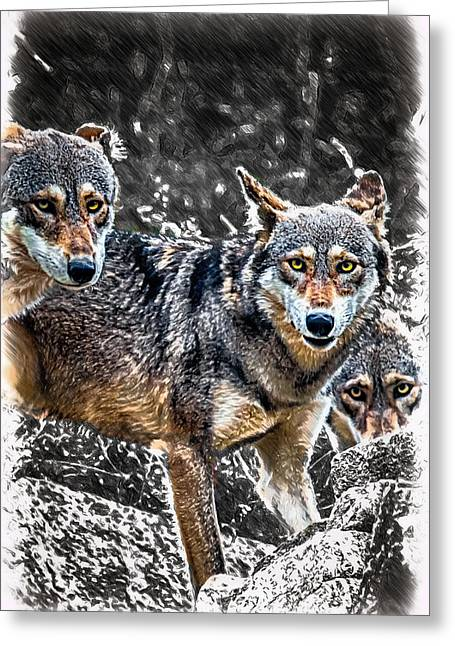 Eyes Of The Red Wolf Greeting Card by John Haldane