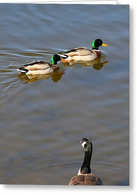 Eyes On The Green Greeting Card