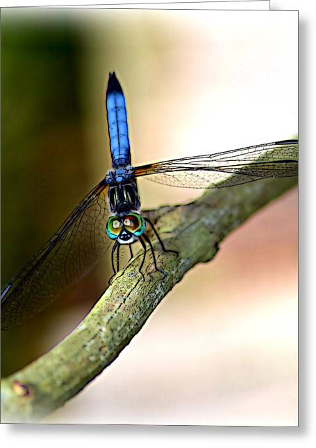 Eyes On You Dragonfly Greeting Card by Sheri McLeroy