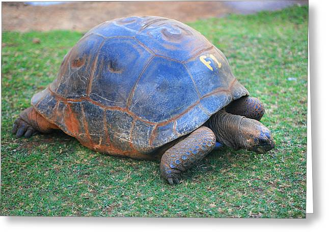 F 1. Giant Turtle In The Pamplemousse Botanical Garden. Mauritius Greeting Card