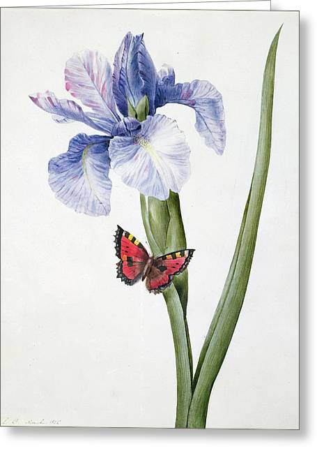 Blue Iris With Butterfly , 1826 Greeting Card by Louise D'Orleans