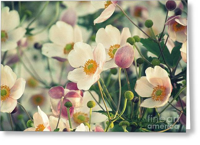 Fabulous  Anemones Greeting Card by France Laliberte