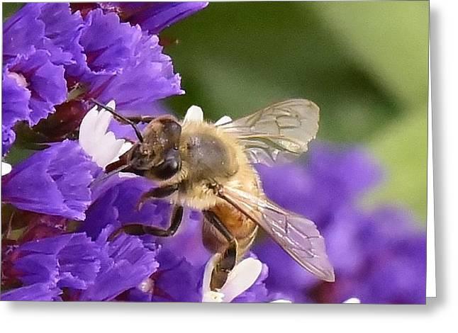 Fabulous Bee Closeup Greeting Card