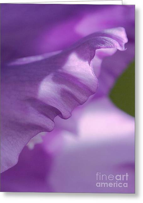 Face In A Glad  Greeting Card by Steve Augustin