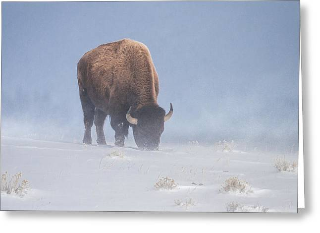 Greeting Card featuring the photograph Faces The Blizzard by Jack Bell