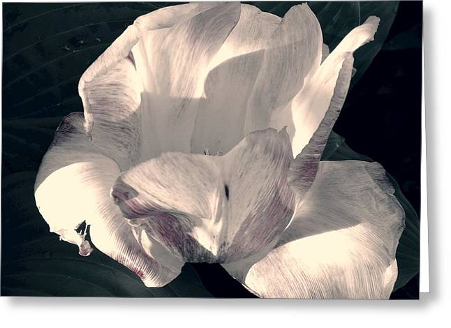 Greeting Card featuring the photograph Faded Beauty by Photographic Arts And Design Studio
