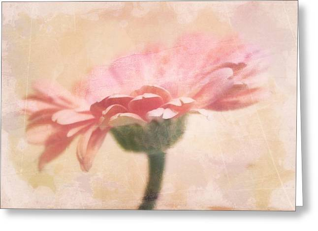 Faded Gerber Greeting Card by Cathie Tyler