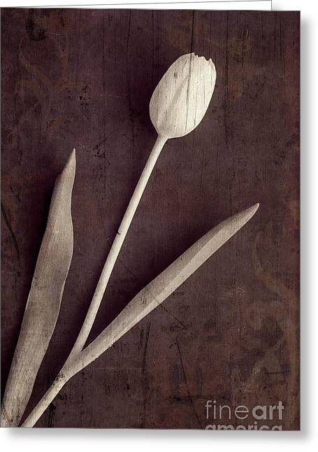 Faded Memories Single White Tulip Greeting Card by Edward Fielding