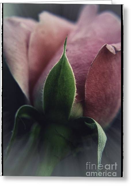 Greeting Card featuring the photograph Faded Rose by Lori Mellen-Pagliaro