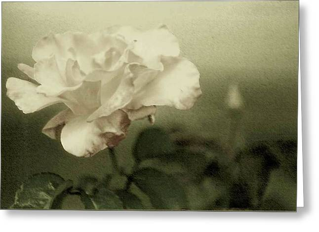 Greeting Card featuring the photograph Faded Rose by Mary Wolf