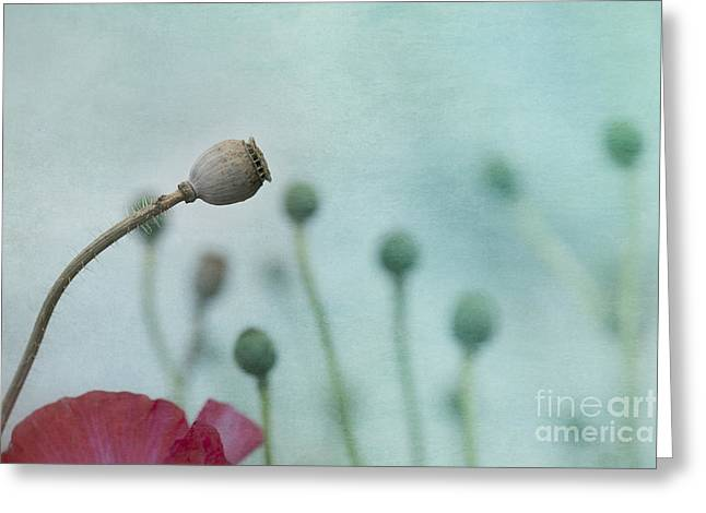 faded summer III Greeting Card by Priska Wettstein