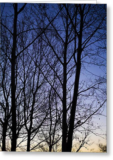 Greeting Card featuring the photograph Fading Light Through The Sycamore Trees by Micah Goff