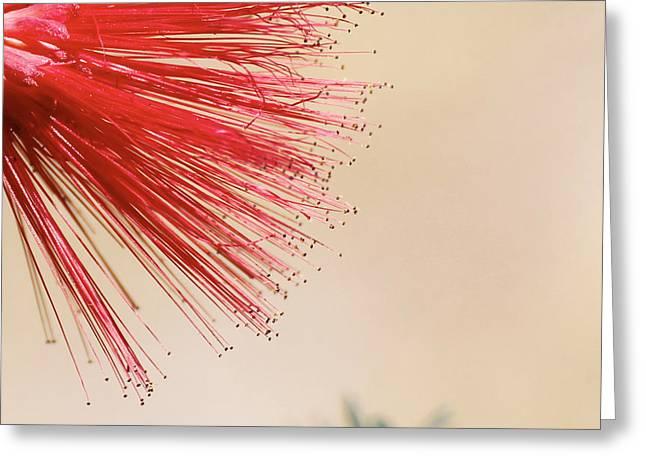 Fairy Duster Greeting Card by Cindy Moleski