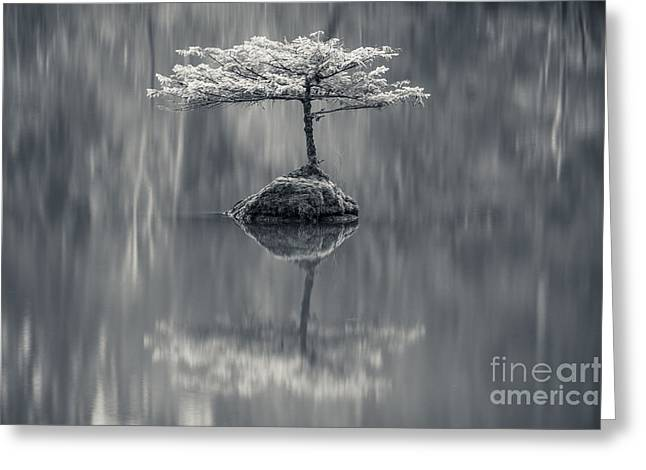 Fairy Lake Fir Black And White Greeting Card by Carrie Cole
