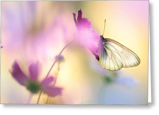 Fairy Light Greeting Card by Jenny Rainbow