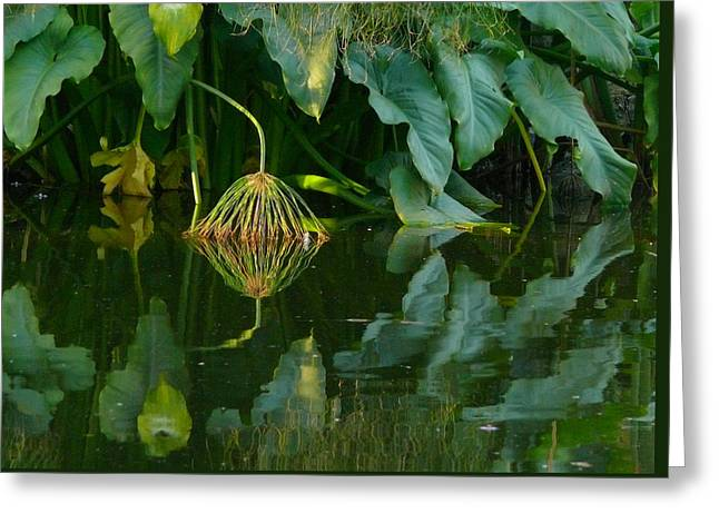 Fairy Pond Greeting Card by Evelyn Tambour