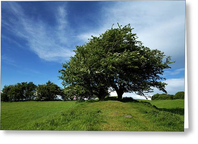 Fairy Tree Hawthorn On The Bank Greeting Card