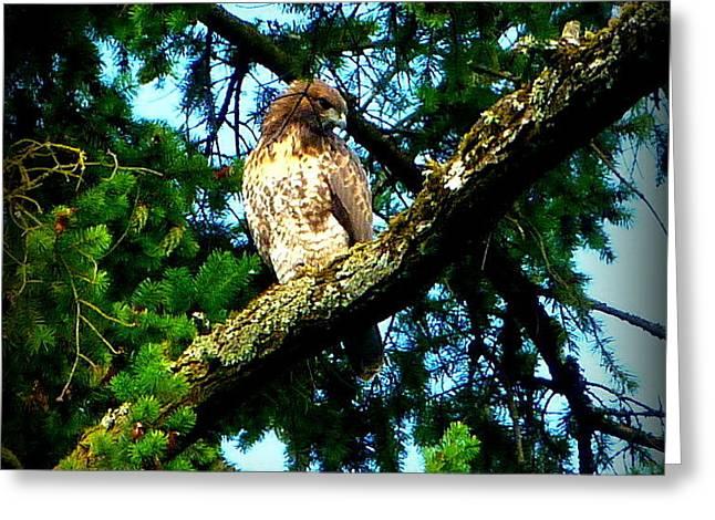Falcon High Greeting Card by Susan Garren